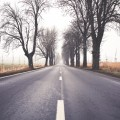 Jezdnia wzdłuż której rosną drzewa