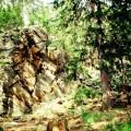 Widok z lasu na formację skalną Krucze Skały